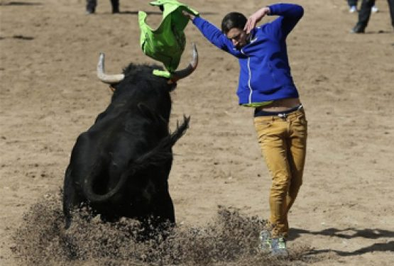 Bullfighting without matadors in northern Spain